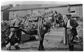 Bill Coles with his Carthorse complete with brasses and ribbons